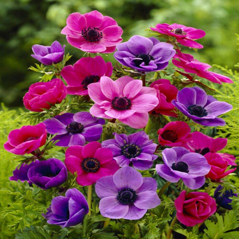 Jouw inzet verdient een bloemetje... Bolkado